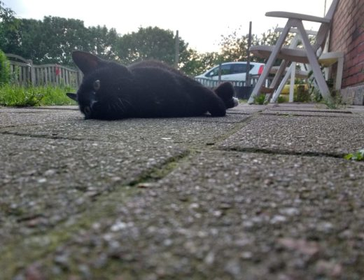 zwarte kat mukkes